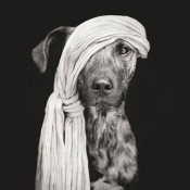 Elke-Vogelsang-photography-dogs-oldskull-thumb