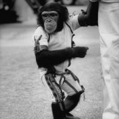 Ham_primer_chimpancé_astronauta-fotografia-oldskull-thumb