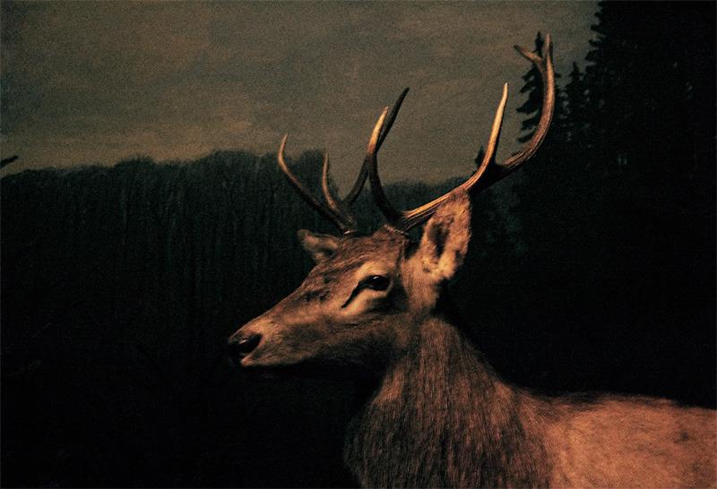 martinjohansson-diseno-oldskull-12