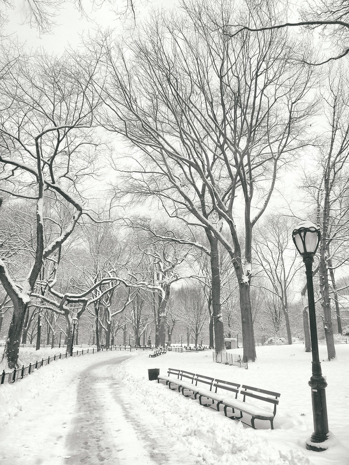 """Central Park Winter - Snow in the Afternoon - New York City"""