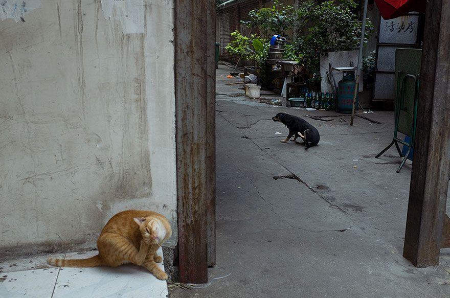 Tao_Liu-fotografia-oldskull-12