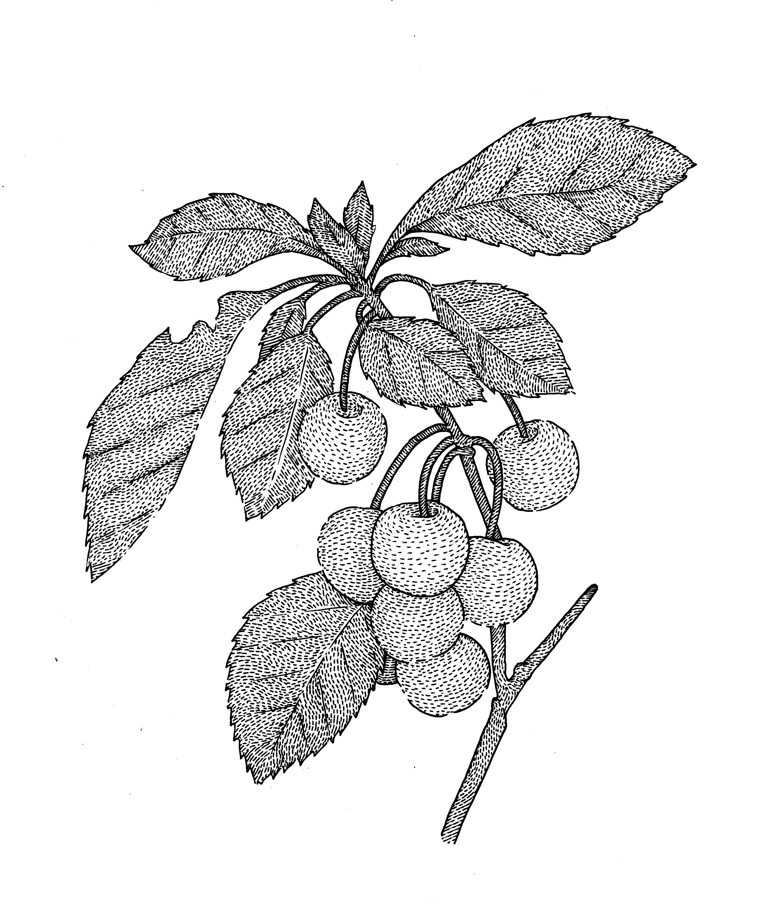 zecardoso-diseno-oldskull-06