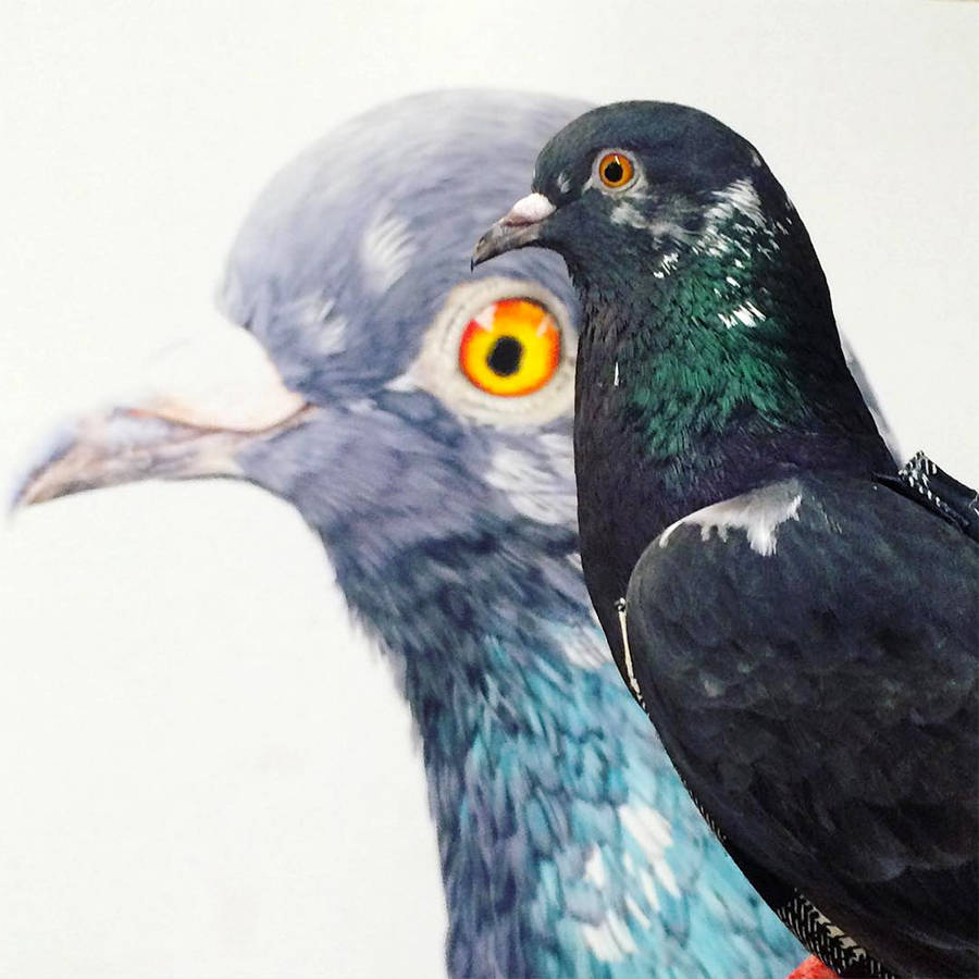 Adele Renault Paints Incredibly Realistic Pigeon