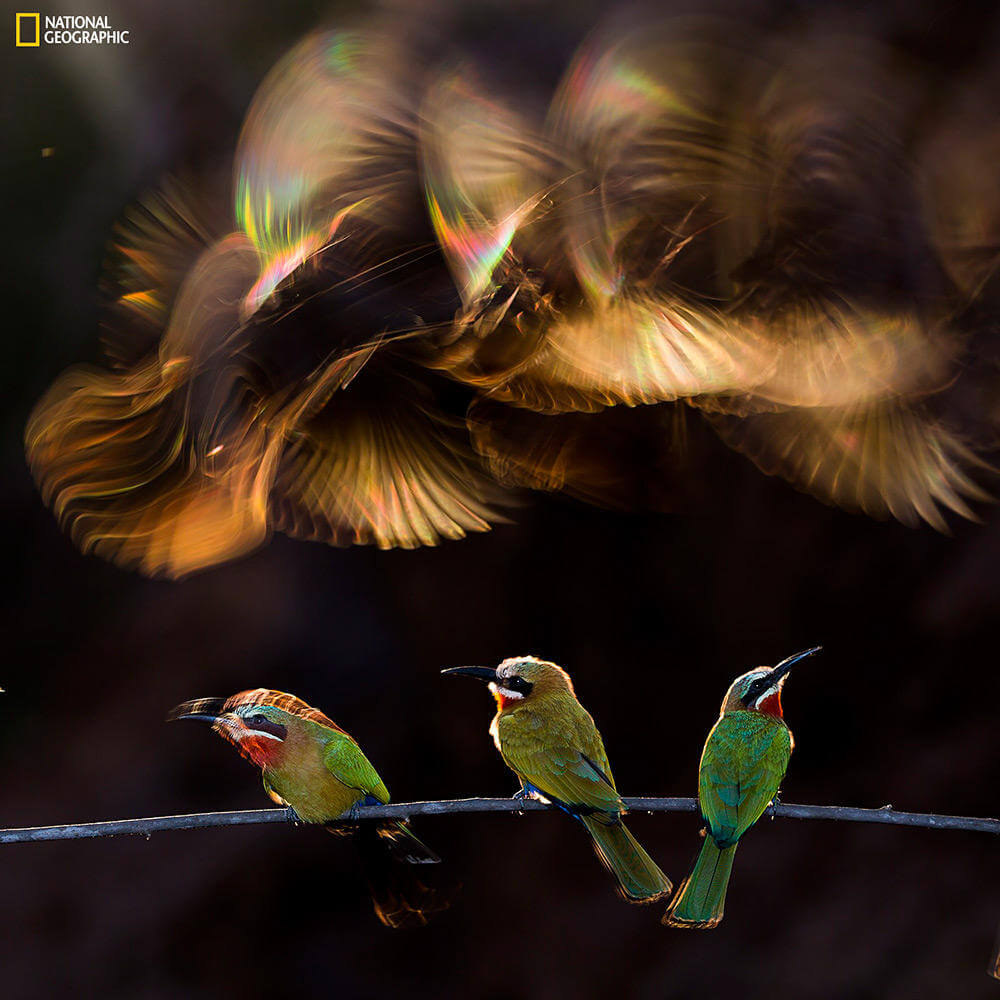 Winners & Honorable Mentions of the 2015 National Geographic Photography Competition (6)