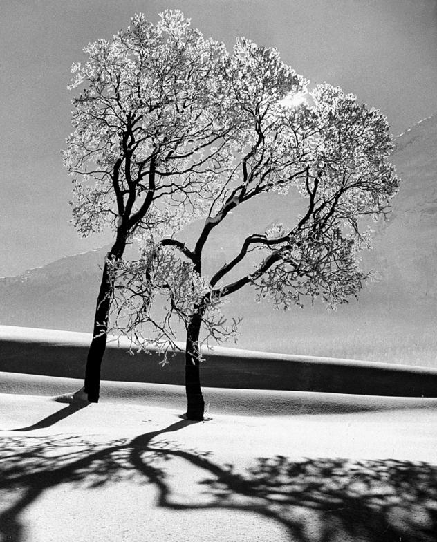 Trees_IC