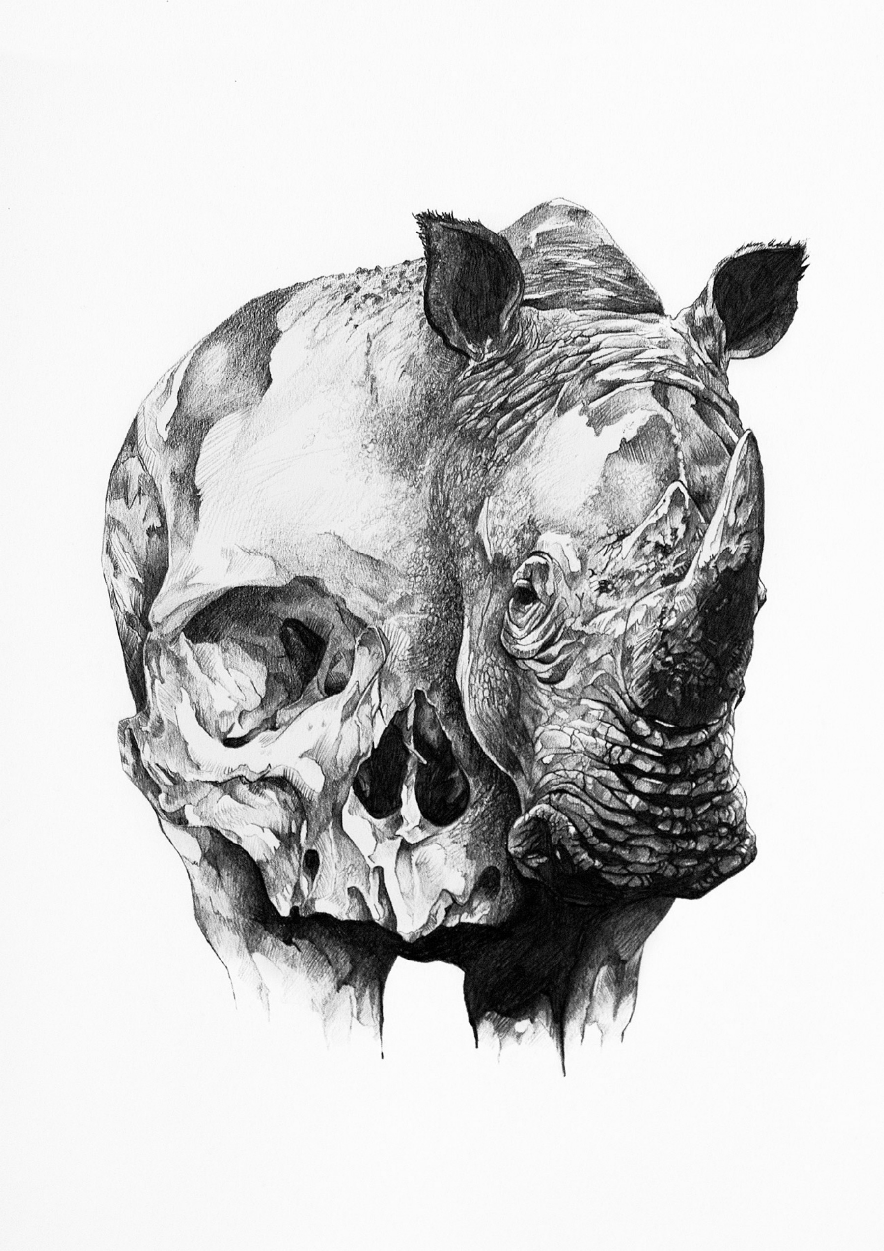 Ivan kamargio illustration 1